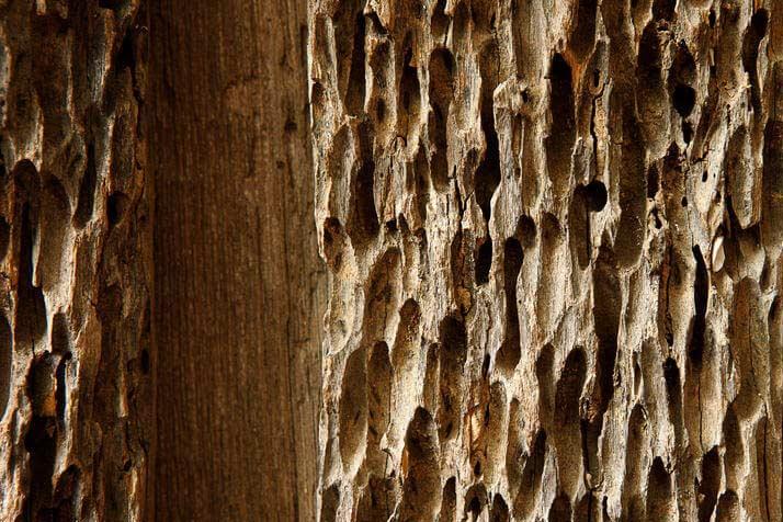 lors de la renovation d'une fermette faites attention au bois attaqué par les termites